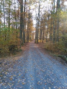 Ruhewald Naturbestattung Weg